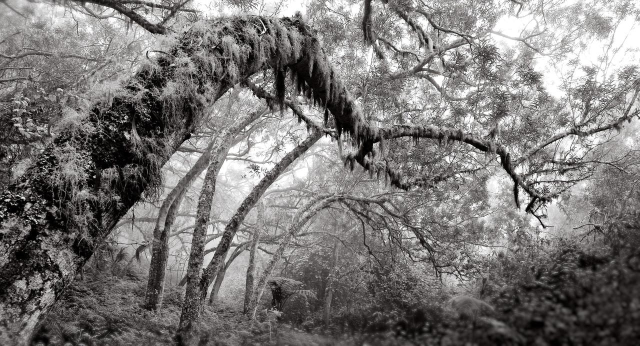 Forêt des Tamarins - La Réunion - cc by-sa manu'pintor - nov.12
