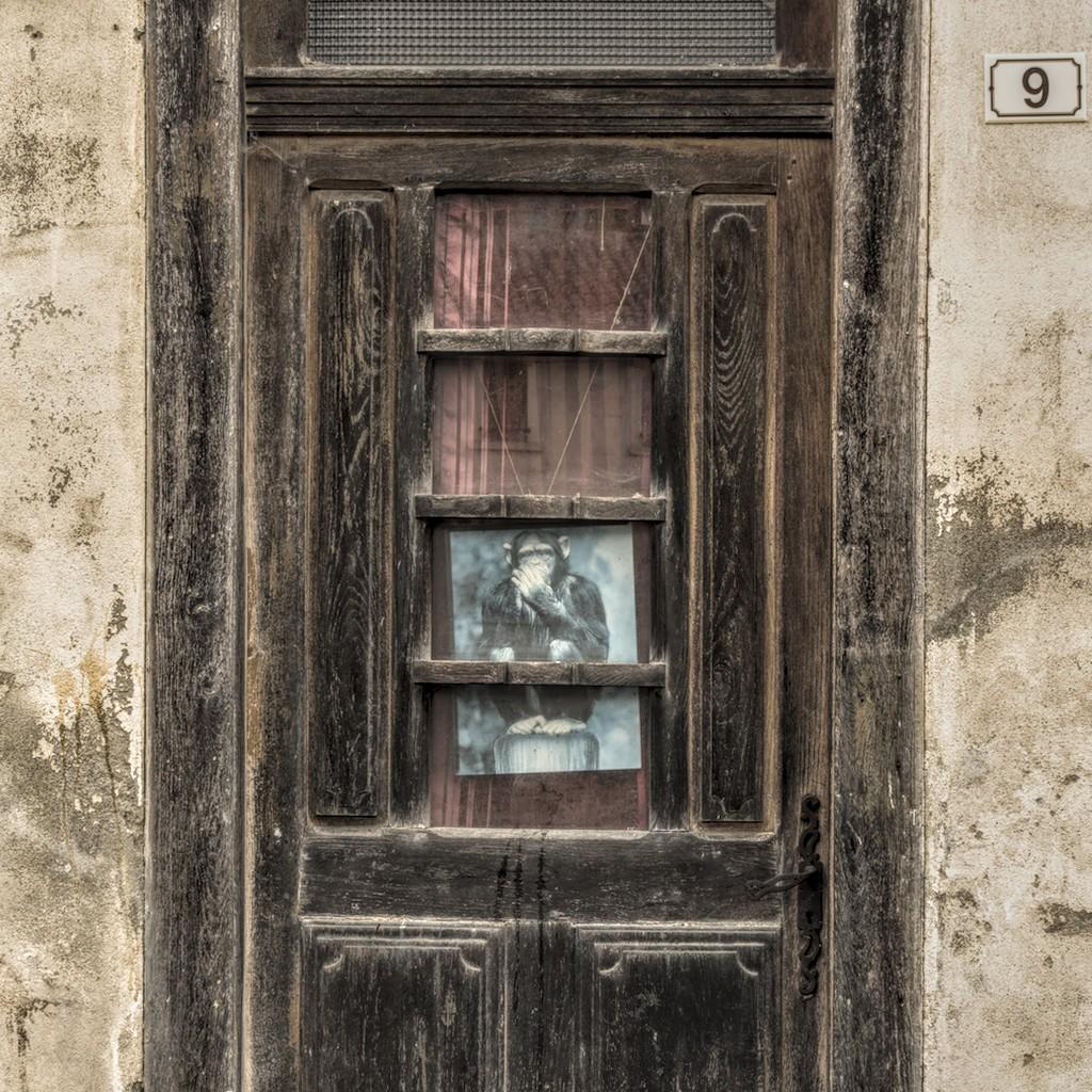 un singe en Ariège - cc by-sa <a href=https://lepassepartout.fr>manu'pintor</a> - juil.20