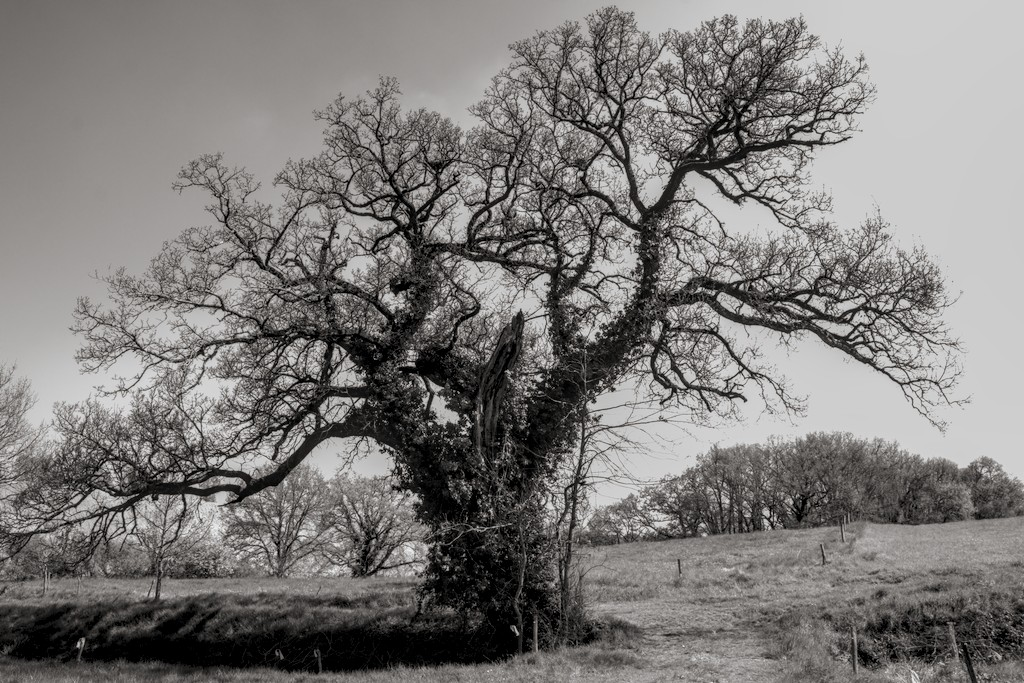 au pied de mon arbre... - cc by-sa manu'pintor - avril 21
